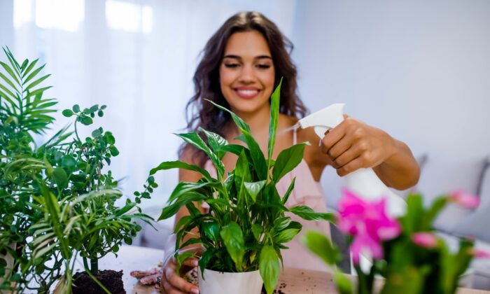 Take care of your plants, and they will take care of you. (Dragana Gordic/Shutterstock)