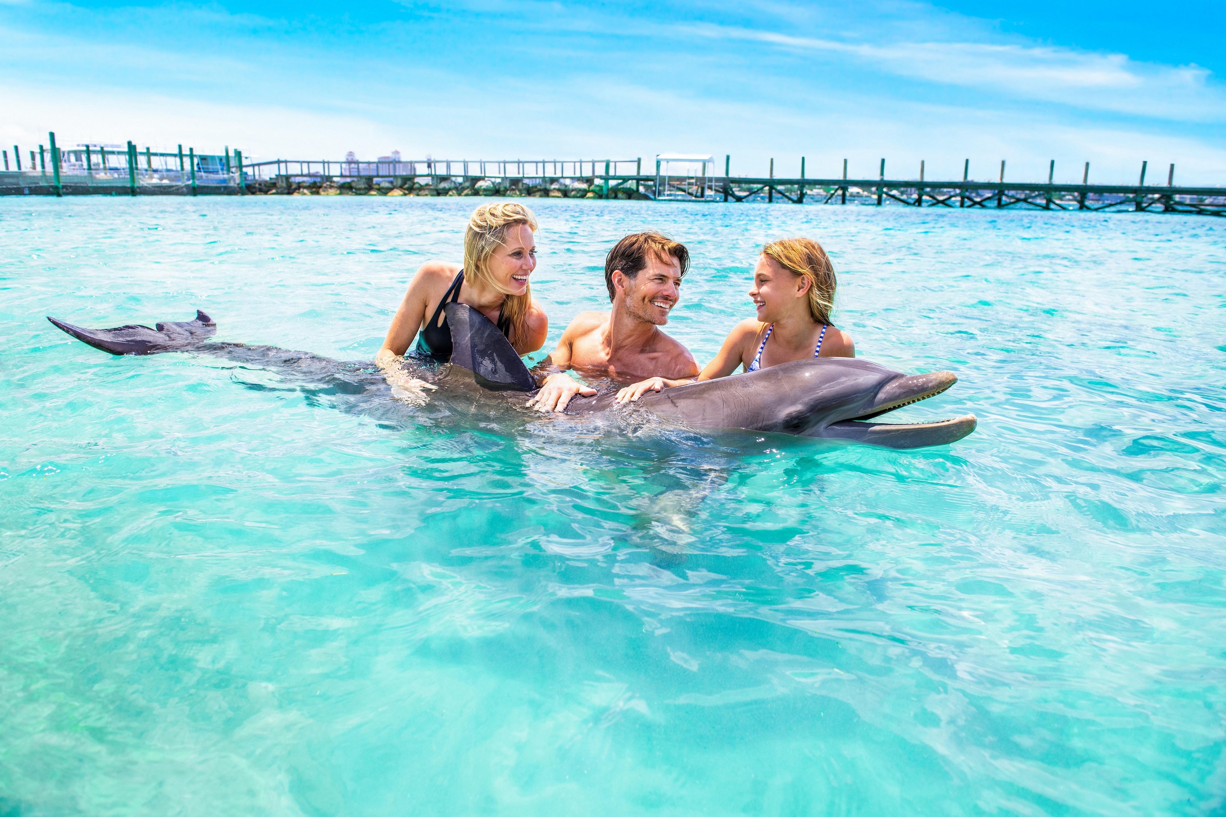 A dolphin encounter.