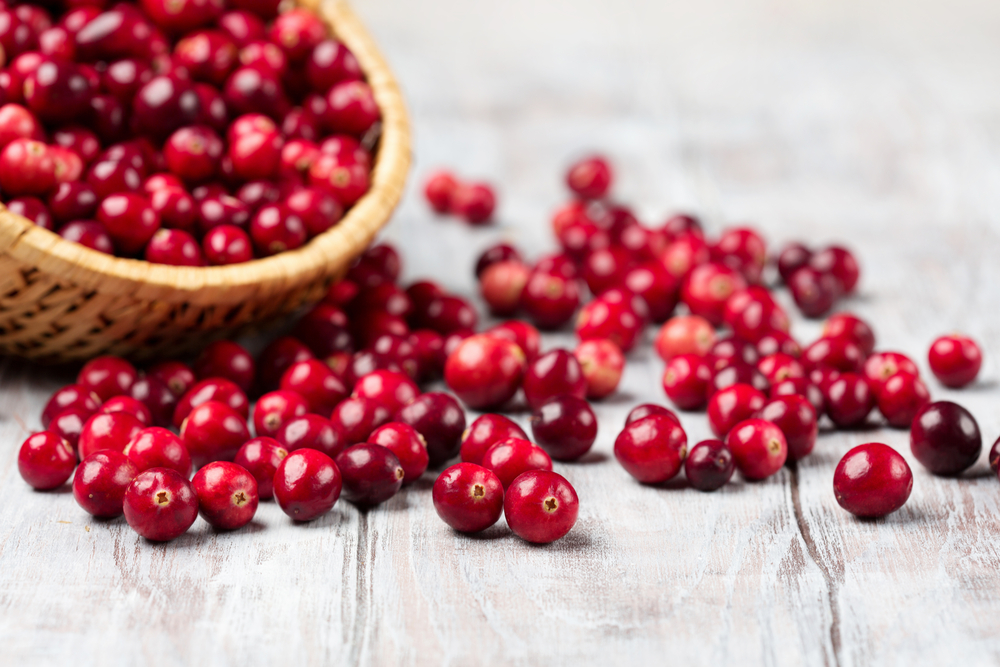 Harvest fresh red cranberries