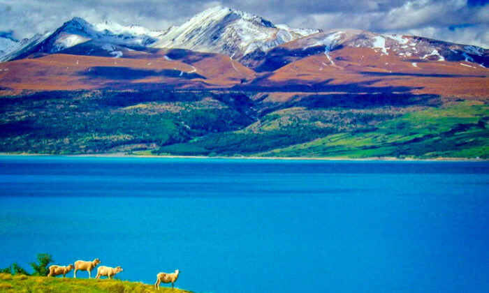A view of Lake Pukaki from the road leading to Mount Cook National Park. (Fred J. Eckert)