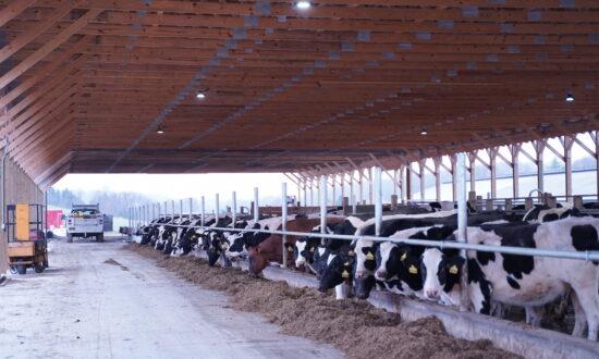 US Dairy Export Council: No Food Supply Shortage