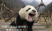 Hong Kong Supporters Chat About Pandas on Thanksgiving Day, While China Intensifies Threats