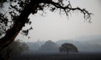 Major Infectious Disease Threatening Oak Trees in California