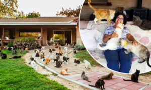 California 'Crazy Cat Lady' Shares Her Home With 1,100 Feral Felines, Finds New Homes for Them