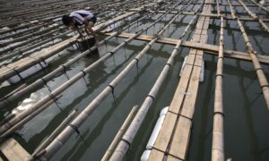 Chinese Abalone Farmers Suffer Huge Losses