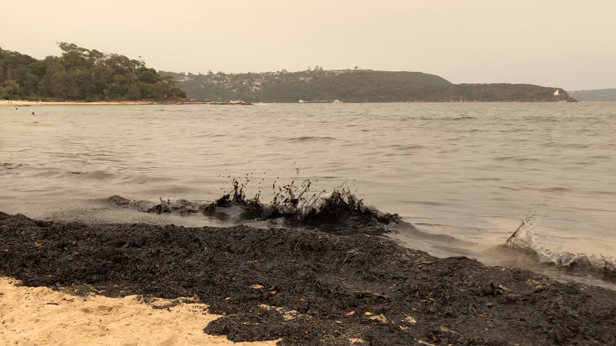 Ash from bushfires that affected New South Wales in the last days is seen on Balmoral Beach in Sydney