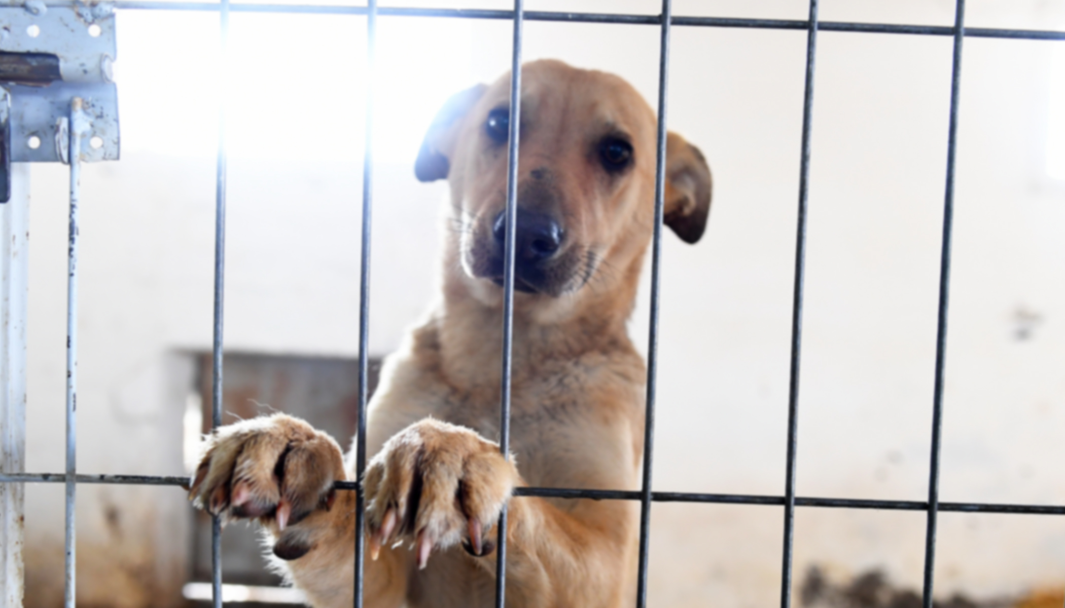 Heartbreaking Photo of the Only Dog Left at the Shelter Goes Viral, and Lands Him a New Family