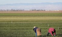 House Approves Bill Giving Some Illegal Immigrant Farmworkers Amnesty