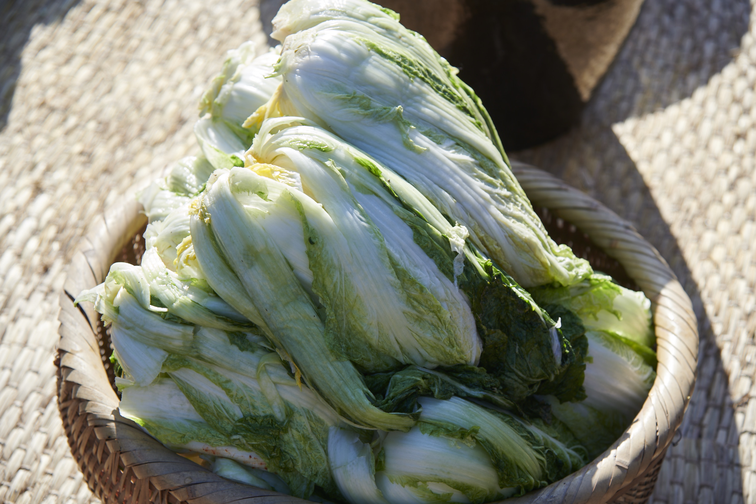 whole heads of brined napa cabbage