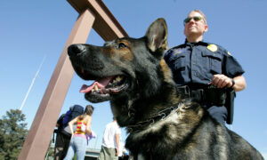 Texas Police Dogs Are Now Allowed to Be Adopted by Handlers After Retirement, per New Bill