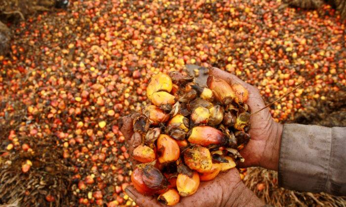 A worker shows palm oil fruits at palm oil plantation in Topoyo village in Mamuju, Indonesia, Sulawesi Island, March 25, 2017. (Antara Foto/Akbar Tado/via Reuters)