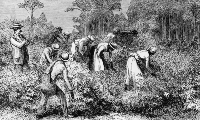 A white landowner overseeing black cotton pickers at work on a plantation in the southern U.S., circa 1875. (Hulton Archive/Getty Images)