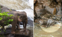 11 Elephants Tragically Plunge to Their Deaths Trying to Save Fallen Calf at Notorious Waterfall in Thailand
