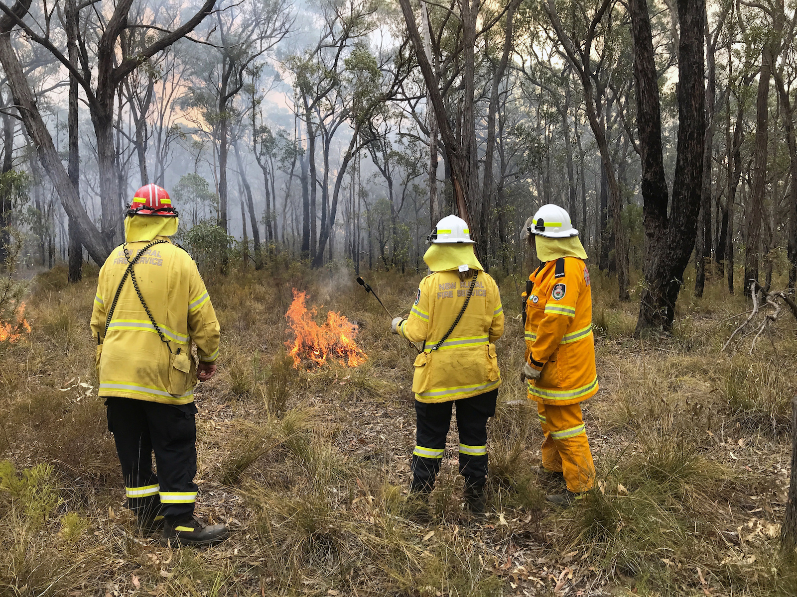 NSW Rural Fire Service observers during back burnning operations near Picton, Australia