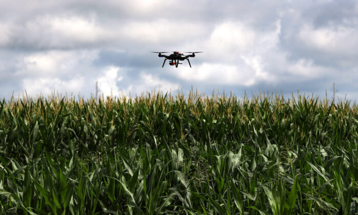 A drone is used to survey a corn research field in College Station, Texas, on May 23, 2018. (Reuters/Adrees Latif)