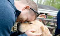 How Training These Service Dogs Helps Veterans Heal