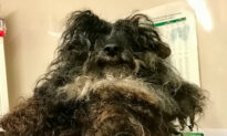 Rescue Staff Shave Matted Hair Off Neglected Dog's Face So it Can Open Mouth to Eat