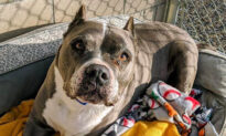 Senior Dog Spends 5 Lonely Years in California Shelter, Until Finally Getting Adopted for Christmas