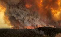 Environmentalists Responsible for Much of Australia's Bush Fire Problem