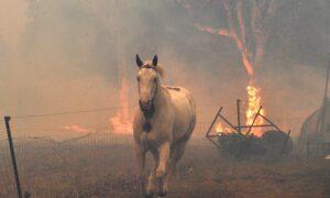 $150 Million Grants Available to Rescue Australian Animal Habitats