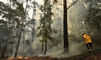Australia's Bushfires Not Caused by Climate Change, Says Leading Expert