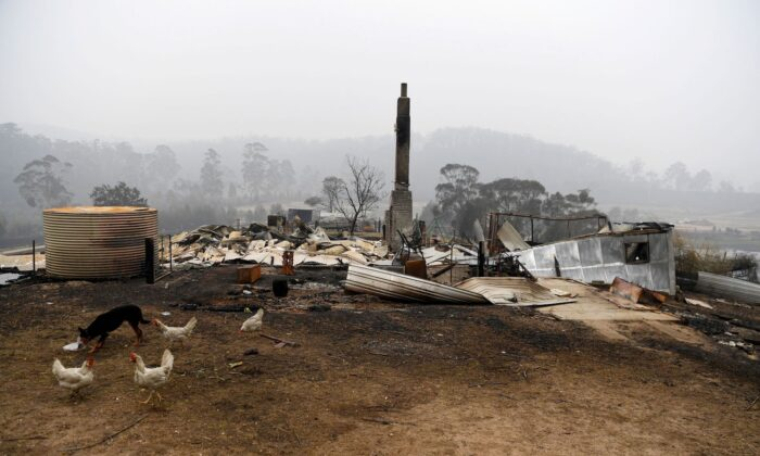 Chickens mill around a burnt out property in Kiah, Australia, on Jan. 8, 2020. (Reuters/Tracey Nearmy)