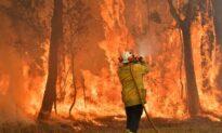 Bushfire Smoke Killed Hundreds of Australians Last Summer