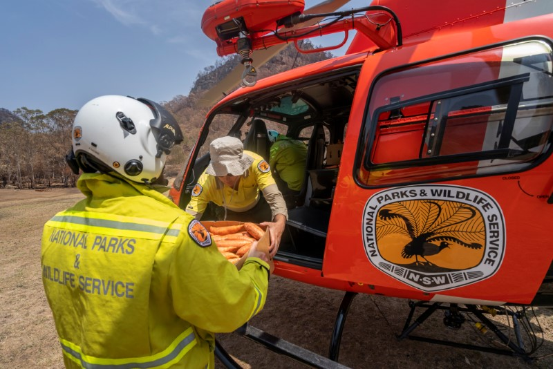 NSW's DPIE staff prepare carrot and sweet potato air-drop in Newnes