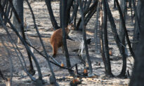 Photos Show Baby Trees Sprouting From the Ashes in Blacked Australian Forest After Bushfire Devastation