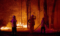 Aboriginals Form All-Female Firefighting Brigade When Australian Bushfires Threaten Sacred Land
