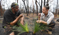 Indigenous Burn Practitioner Urges Changes to Australia's State Fuel Management Policies