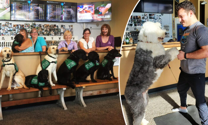 """(Photo courtesy of Fido's - """"World's First Dog Tap House"""")"""
