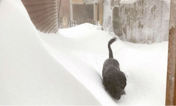 A dog is seen in a blizzard in St John's