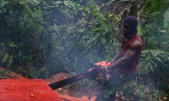 Activists, Experts Concerned About China's Deforestation Activities in Africa
