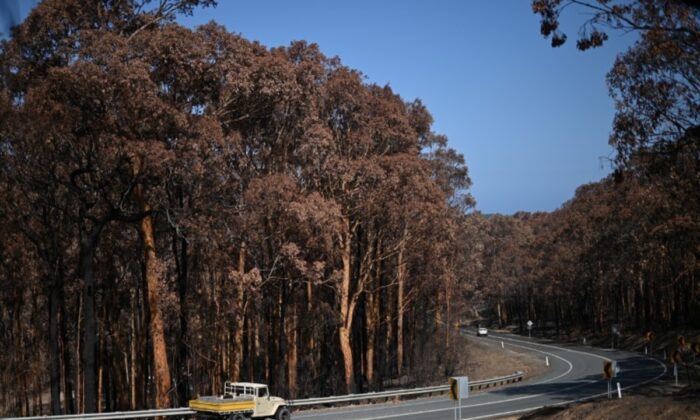 A truck drives past charred trees burnt during the recent wildfires near Batemans Bay, New South Wales, Australia, on Jan. 22, 2020. (Loren Elliott/Reuters)