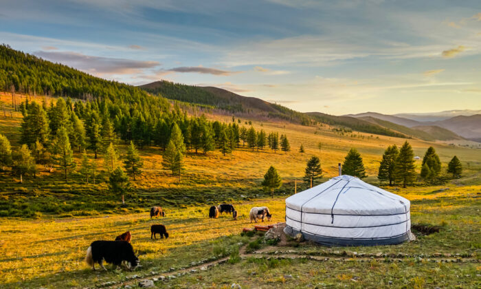 Yurts are a mainstay of a historically nomadic way of life. (Christian Kornacker/Shutterstock)