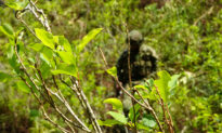 Colombia Aims to Eradicate More Than 321,000 Acres of Coca in 2020