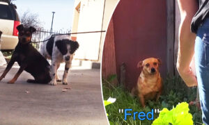 3 Dogs Left Homeless After Owner Dies Get a Second Chance–If Rescuers Can Catch Them!