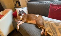 How a Navy Veteran and Abused Pit Bull Saved Each Other