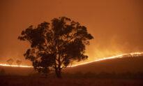 Australia Launches National Inquiry Into Devastating Bushfires