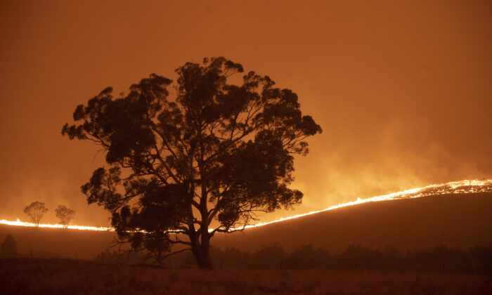 The Clear Range Fire burns near Bredbo North, Near Canberra, Australia on Feb. 1, 2020. (Brook Mitchell/Getty Images)