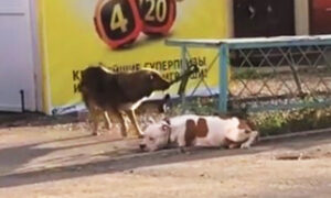 Stray Dog Sees 'Abandoned' Dog With Leash Tied to a Fence and 'Rescues' His New Friend