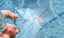 The Promise and Perils of Gene Editing