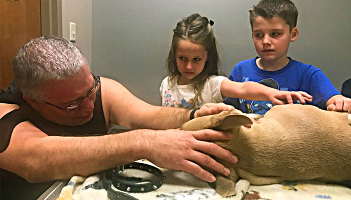 Faithful pit bull sacrifices own life killing deadly coral snake to save life of family children