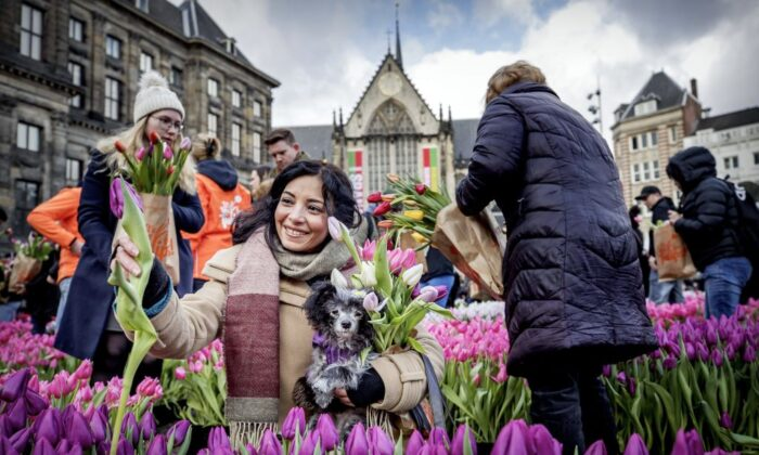 Visitors pick up tulips in Dam Square in Amsterdam during National Tulip Day on Jan. 18, 2020. (Photo by KOEN VAN WEEL/ANP/AFP via Getty Images)