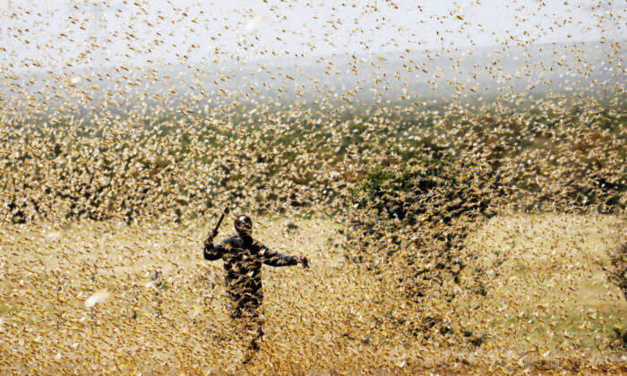 A man attempts to fend-off a swarm of desert locusts at a ranch near the town on Nanyuki in Laikipia county, Kenya, Feb. 21, 2020. (Baz Ratner/Reuters)