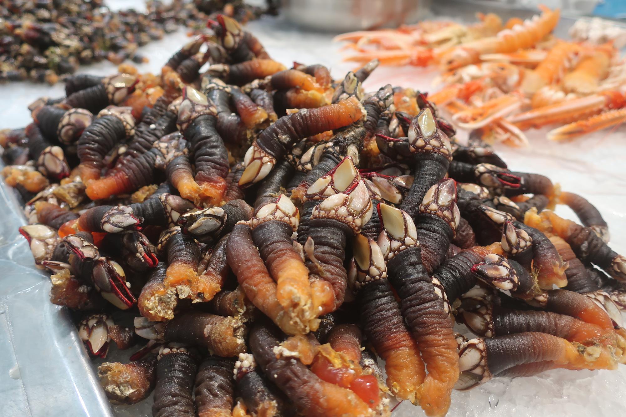 goosenack barnackes