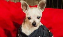 Tiny Dog Abandoned at the Vet for Being 'Too Old' Goes Viral on Social Media, Finds Forever Home