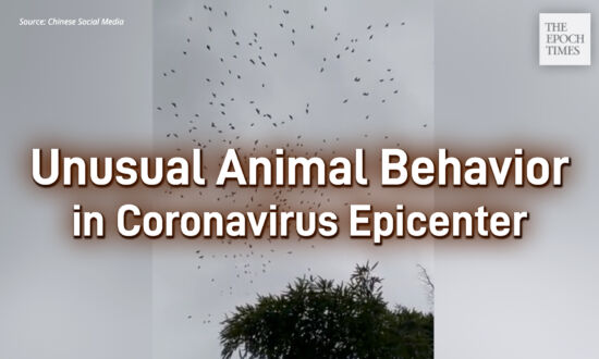 Unusual Animal Behavior in Coronavirus Epicenter