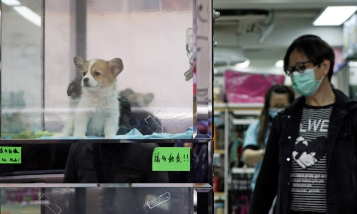 A man wearing a face mask looks at dogs in a pet shop in Hong Kong on March 5, 2020. (Kin Cheung/AP Photo)